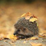 ハリネズミの冬の対策について