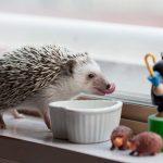 ハリネズミの餌になるミルワームの缶詰?